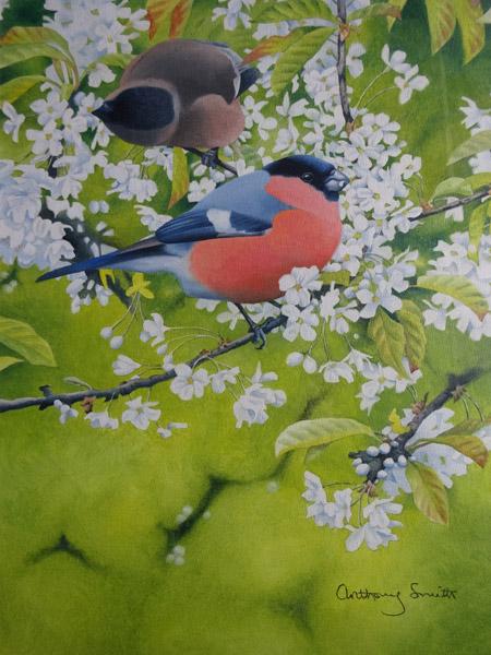 nerve26-birdman3