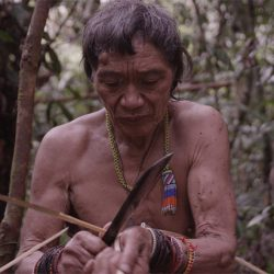 Tawai: A Voice From The Forest (U)