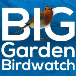 Fireweed* - The Big Garden Birdwatch