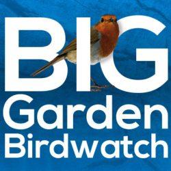 Fireweed* - The Big Garden Birdwatch