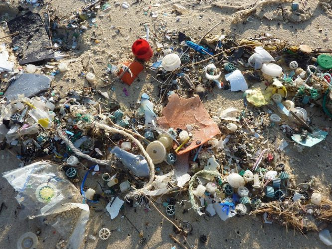 Lifespan of Plastics vs Animals