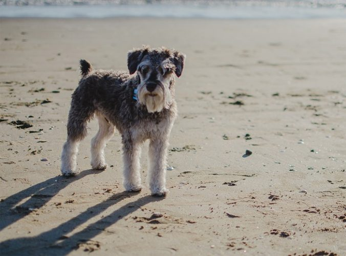 Palm Oil warning to dog owners on Formby Beach