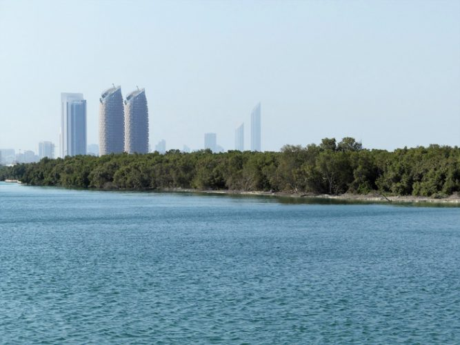 The Mangrove Forests in Abu Dhabi