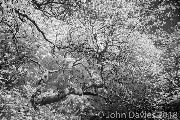 Saving Calderstones – Trees Under Threat
