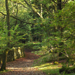 The Heart of England Forest