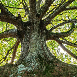 Tree, a poem by David Greygoose